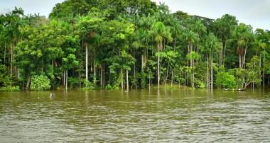 Впечатления от путешествия по Амазонии